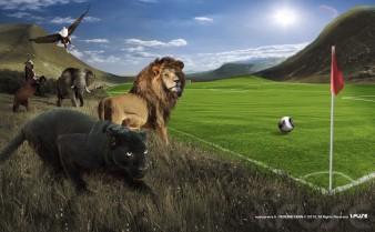 Photographe Animalier & photomontage animaux en Paca / Yann PEREIRA/ éléphant,animaux afrique Publicité-Conté,Lion, pentaire.noir.animaux.foot.Coup d'Afrique des Nation