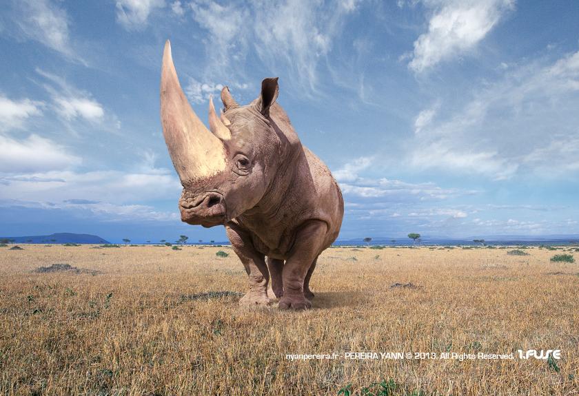 LE.Rhinoserose