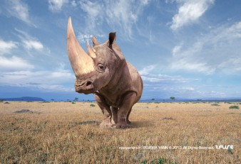Photographe Animalier en PACA / YANN PEREIRA. Rhinoserose. photomontage.Retouchephoto.Publicié