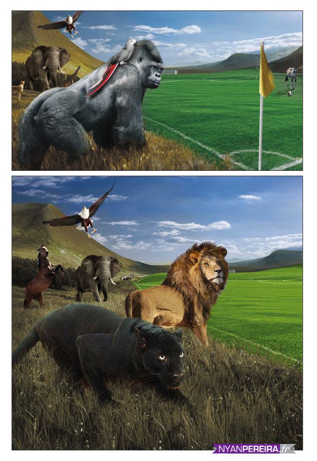 Animals Photo Manipulation french artiste